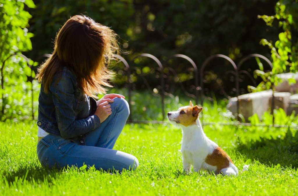 The most effective dog training tips – for you!