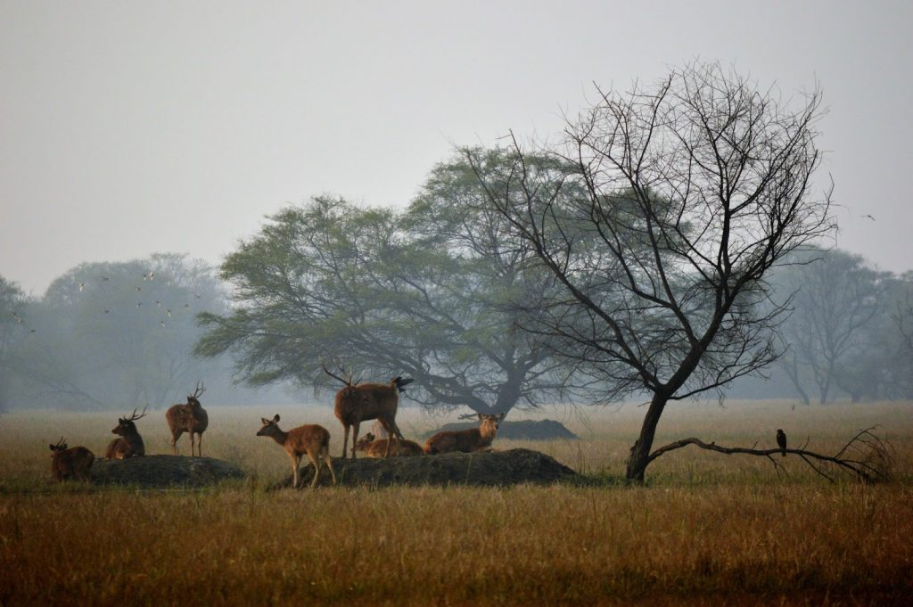 5 Rich Wildlife Parks to See Near Delhi